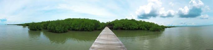 Puente en el bosque del mangle, proyecto real, Tailandia Imágenes de archivo libres de regalías