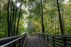 Puente en el bosque del verano Imágenes de archivo libres de regalías