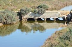 Puente en el pantano Fotografía de archivo libre de regalías