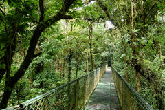 Puente en la selva Foto de archivo libre de regalías
