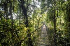 Puente en la selva Foto de archivo