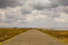 Puente en pantano fotos de archivo libres de regalías