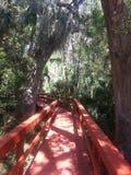 Puente en un pantano Fotografía de archivo libre de regalías