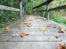 Puente frondoso Imagenes de archivo