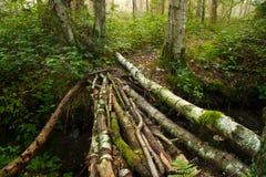 Puente hecho de troncos del abedul Fotografía de archivo