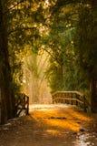 Puente mágico en el bosque profundo durante la puesta del sol Colores y luz del sol mágicos del misterio fotos de archivo libres de regalías