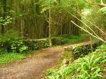 puente Musgo-cubierto en el bosque imagen de archivo libre de regalías