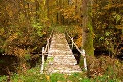 Puente natural creado de troncos del abedul con la corteza blanco y negro Trayectoria en un bosque colorido del otoño Foto de archivo