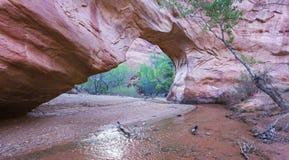 Puente natural del coyote Fotos de archivo libres de regalías