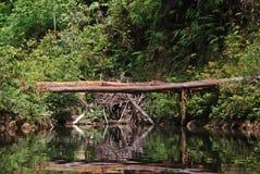 Puente natural en Taman Negara, Malasia Imagen de archivo libre de regalías