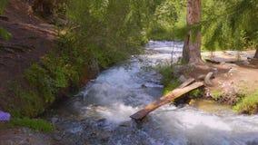 Puente peligroso de tablones de madera sobre el río tempestuoso en bosque verde almacen de video