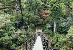 Puente que cuelga paisaje de la naturaleza de la aventura del rastro de Forest Trekking Fotos de archivo