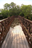 Puente que lleva al mangle Imágenes de archivo libres de regalías
