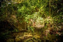 Puente romano viejo en el bosque imagen de archivo libre de regalías
