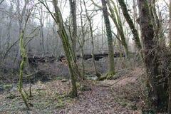 Puente sobre árboles del canal del río Foto de archivo libre de regalías