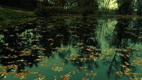 Puente sobre el lago en el bosque del otoño metrajes