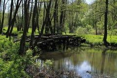 Puente sobre el río del bosque Fotos de archivo libres de regalías