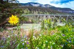 Puente sobre Fraser River en Williams Lake British Columbia C imagen de archivo