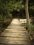 Puente a través del bosque Imagen de archivo