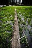 Puente a través del prado crecent, parque nacional de secoya Imagen de archivo