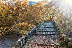 Puente viejo de la escalera en el parque cubierto con las hojas de arce amarillas Otoño Imágenes de archivo libres de regalías