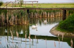 Puente viejo sobre el lago Imagen de archivo libre de regalías