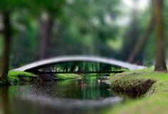 puente y patos del parque del Inclinación-cambio en agua Mucha mala hierba verde a Fotografía de archivo