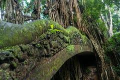 Puente y selva viejos en el mono sagrado Forest Sanctuary, Ubu Foto de archivo