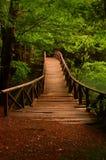 Puentee al lago Bolu Turquía de la selva siete Imagenes de archivo