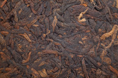 Puer Royalty Free Stock Image
