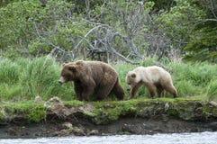 Puerca y Cub del oso de Brown Foto de archivo libre de regalías
