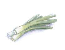 Puerro de la acuarela, ingredientes para el plato Imagen de archivo