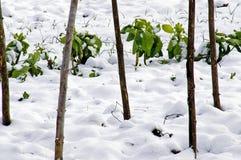 Puerros y col en la nieve   Imágenes de archivo libres de regalías