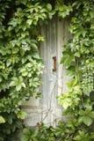 Puerta abandonada misteriosa Fotos de archivo libres de regalías