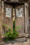 Puerta bloqueada y árbol joven de madera Imagen de archivo libre de regalías