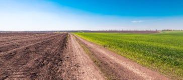 Puerta cerca del campo del trigo joven en campo de la primavera Imagenes de archivo