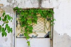 Puerta cerrada de la hiedra foto de archivo
