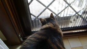 Puerta de Cat In Ambush Behind The almacen de video