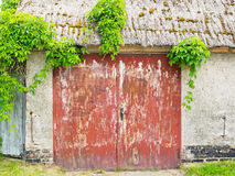 Puerta de granero roja con las enredaderas Imagen de archivo