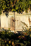 Puerta de granero vieja demasiado grande para su edad con las plantas Imagen de archivo
