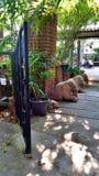 Puerta de jardín y elefantes del adornamiento Foto de archivo libre de regalías