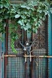 Puerta de la vendimia y planta overgrown Foto de archivo