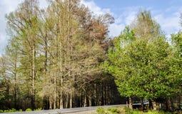 Puerta de los árboles Fotografía de archivo libre de regalías