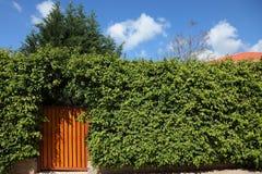 Puerta de madera amarilla Foto de archivo libre de regalías