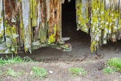 Puerta de madera arruinada vieja Fotografía de archivo libre de regalías