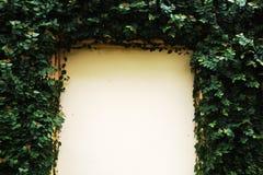 Puerta de madera enmarcada con la hiedra en un edificio imagen de archivo libre de regalías