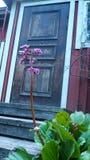 Puerta de madera vieja con una flor en Finlandia foto de archivo