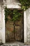 Puerta de madera vieja cubierta en vides Imagen de archivo