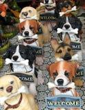 Puerta del bloque del perro Imágenes de archivo libres de regalías