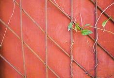 Puerta del metal de Ivy Climbing On A fotografía de archivo